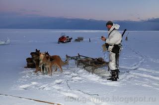 Олени хорошо, а собаки лучше. Остров Вайгач. Ненецкий автономный округ. Природа НАО.