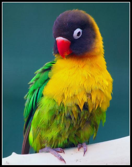 http://4.bp.blogspot.com/-Hgy8jPsIZAE/TV_tK8OVLfI/AAAAAAAANfs/QYb7SyKNVR0/s640/rainbow-colored+bird.jpg