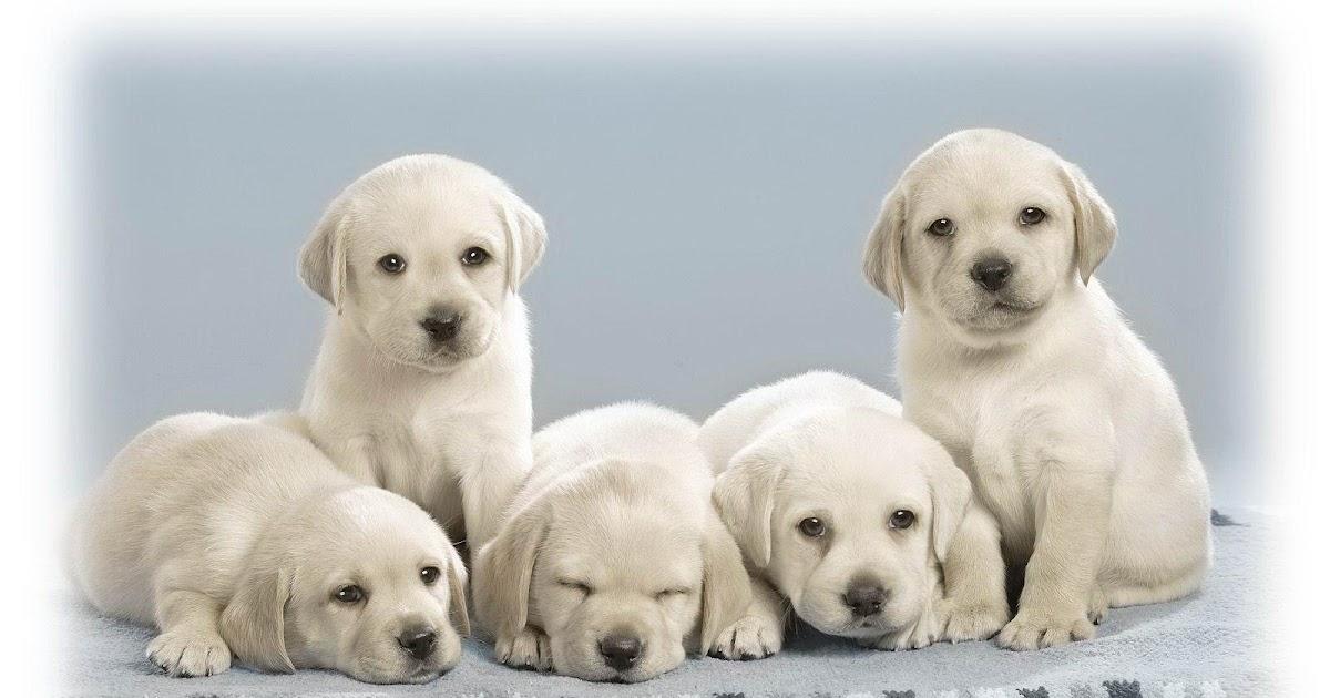 Menghitung Keberhasilan Foto 5 Anak Anjing Lucu