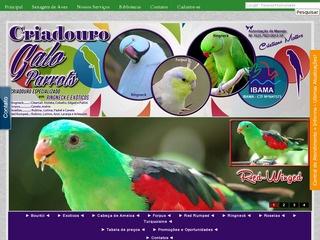 Criadouro Galo Parrots