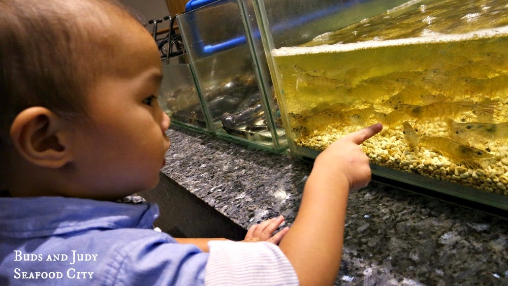 Seafood City. Seafood Restaurant in Cebu City, little boy pointing at the aquarium