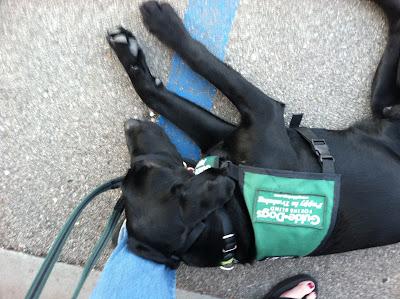 Foley sleeping in a parking spot