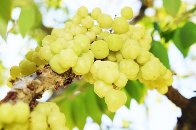 thai date fruit