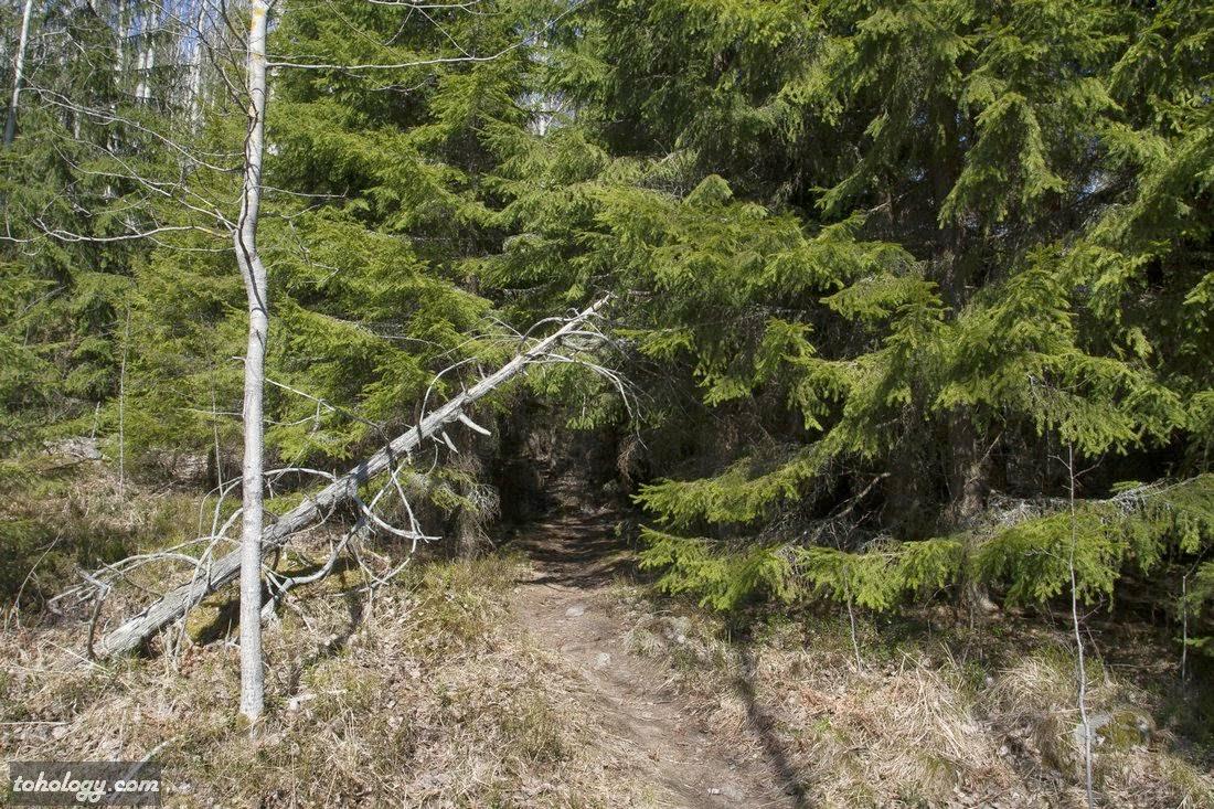 Path up to the Neitvuori top // Тропинка к вершине Нейтвуори