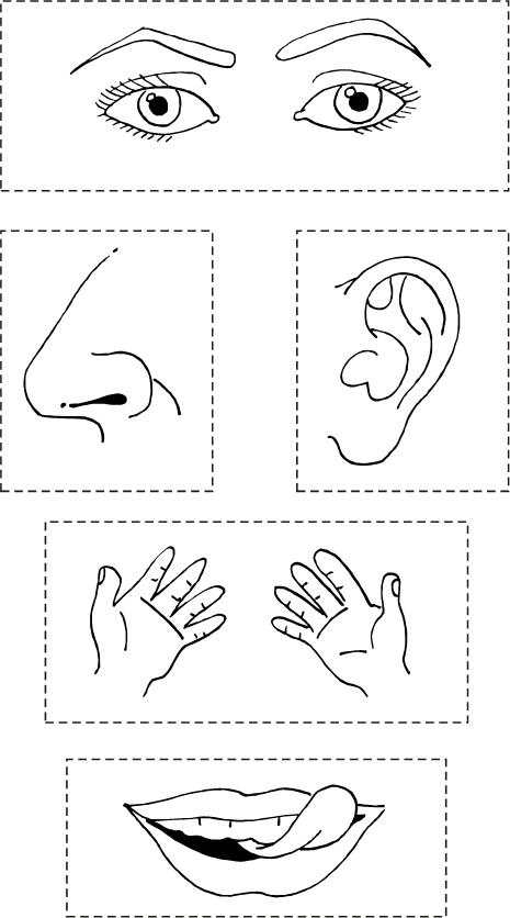 Dibujos para pintar los 5 sentidos - Imagui