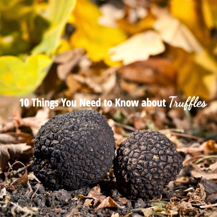 10 things you need to know about truffles
