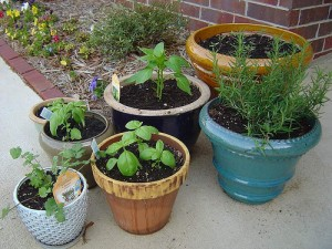 Types of soil for container gardening green patches mediterranean gardening - Soil for container vegetable gardening ...