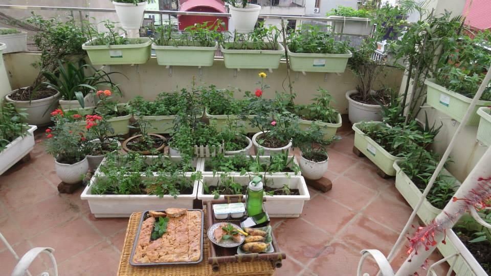 Chậu nhựa Nhật thông minh trồng rau sân thượng