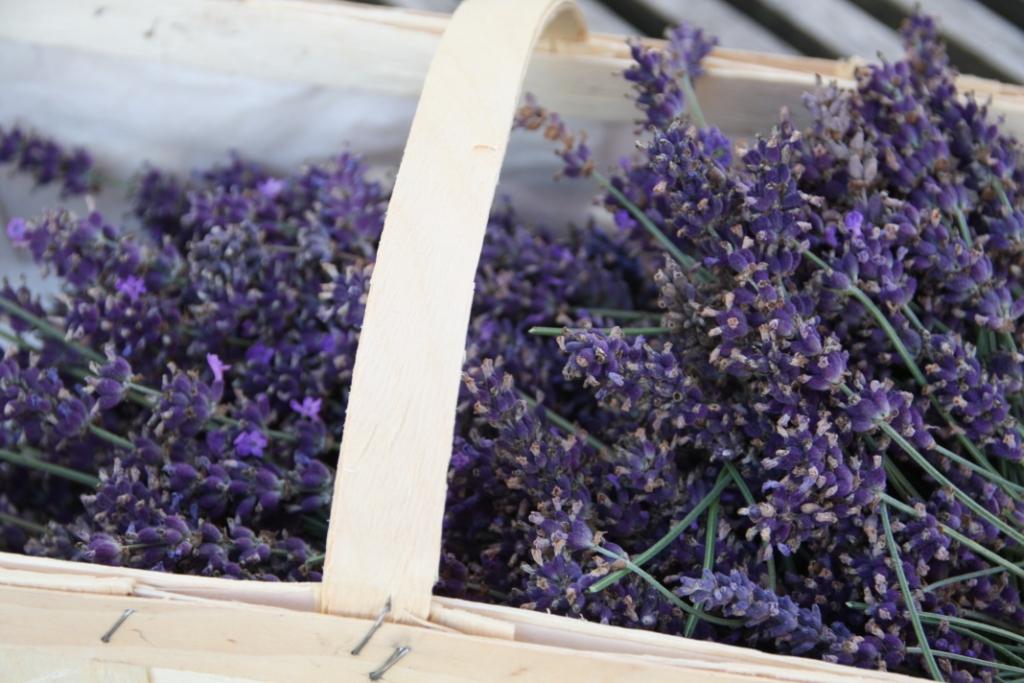 teacup in the garden lavendelernte. Black Bedroom Furniture Sets. Home Design Ideas
