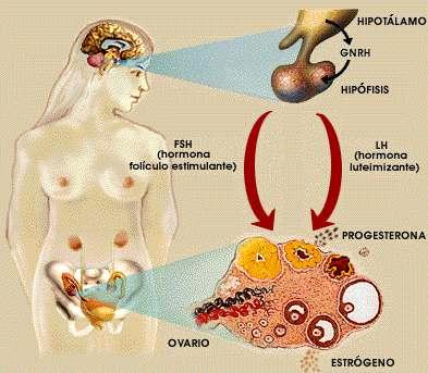 nuzhen-li-organizmu-seks