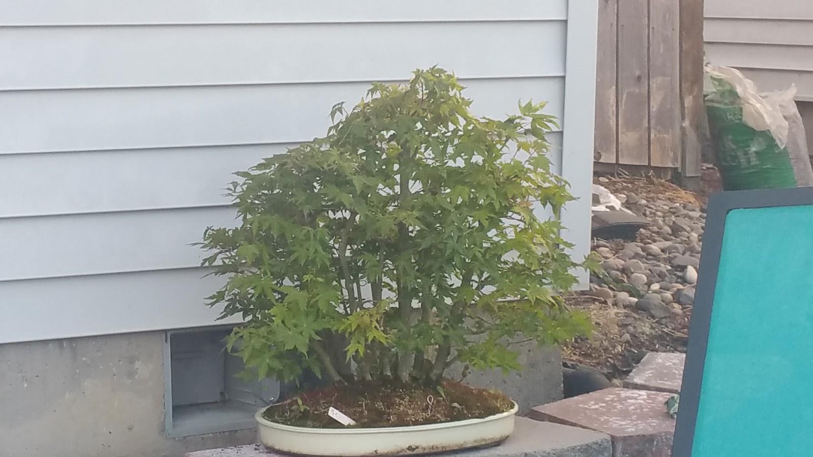 The Bonsai Of Jason