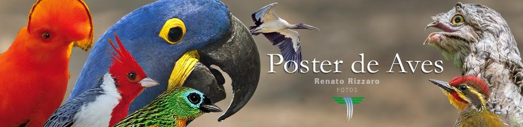 Poster de aves brasileiras - Atlantica Pantanal Amazonia Pampa Cerrado Caatinga