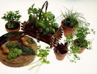 Herb Gardener