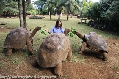 Three turtles.