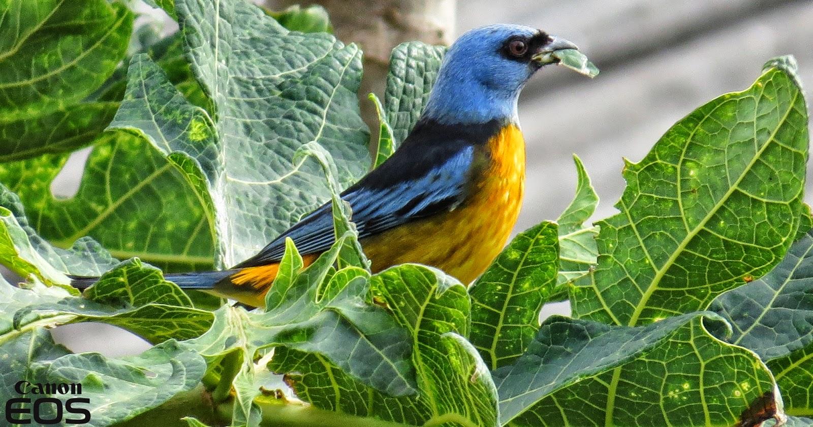 A Arte da Fotografia Pássaros Silvestres Borrazópolis