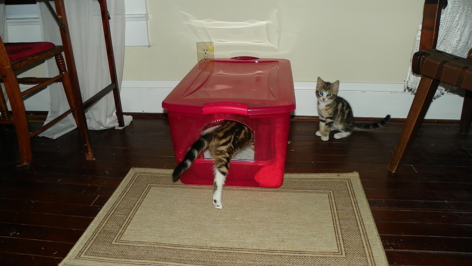 Two Broke Bruces Diy Litter Box
