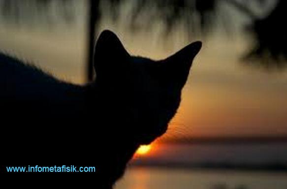 Mitos Mengerikan Kucing Hitam pada 8 Negara di Dunia