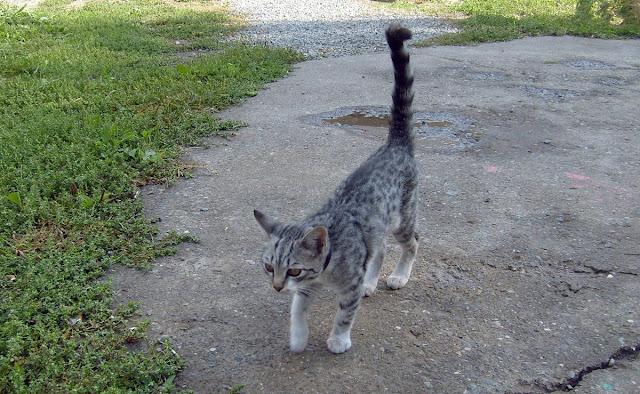 Черый кот на прогулке