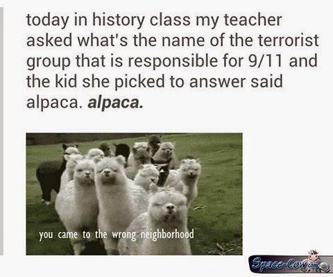 funny alpaca picture humor