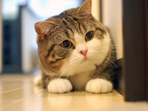 i-cats
