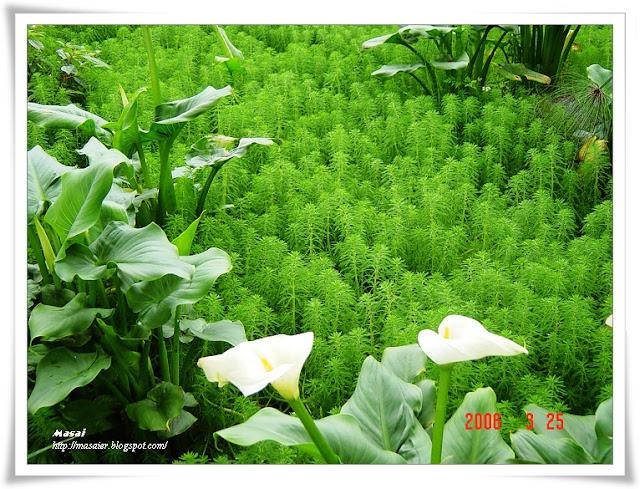 新竹六號花園1