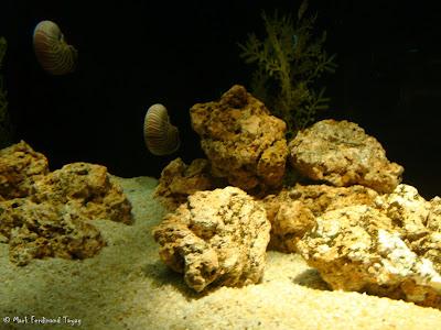 Siam Ocean World - Bangkok Photo 1