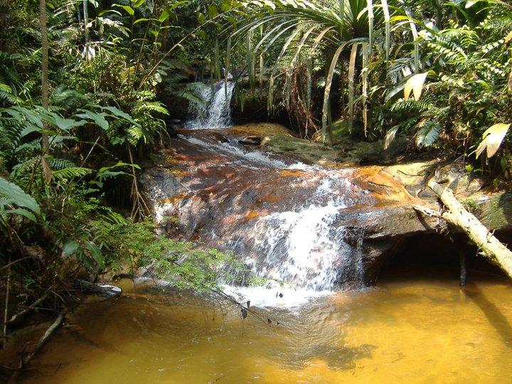 Taman Nasional Bukit Tigapuluh 30 Tnbt Attayaya Blog