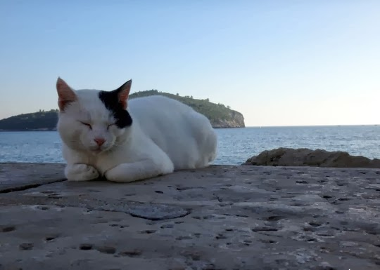 cat of dubrovnik croatia