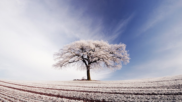 Beautiful White Lonely Tree