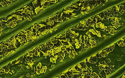 Food Photographed with an Electron Microscope Seen On www.coolpicturegallery.us