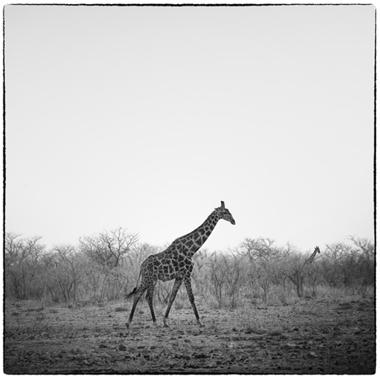 Safari Fusion blog | Photographer Christopher Rimmer | Black & white images from Namibia, Southern Africa