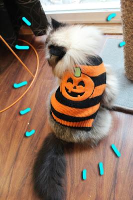 Halloween-cat-costume_03