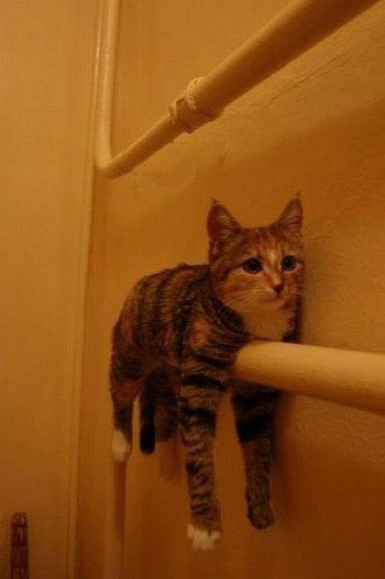 смешные картинки с котами - кот лежит на батарее