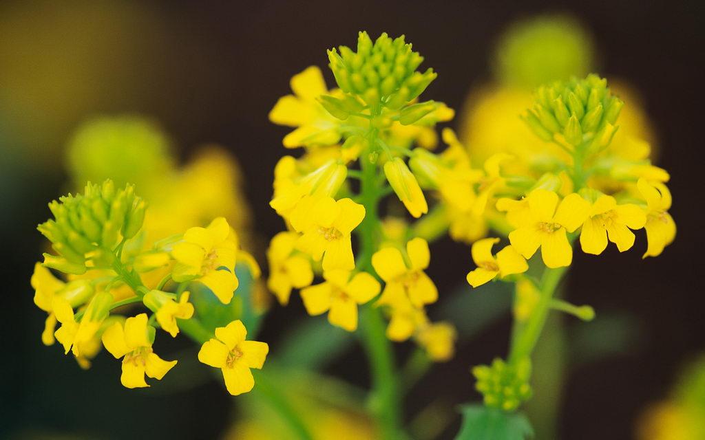 images of flowers for desktop. Fresh Flowers HD Desktop