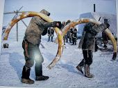 Défenses de Mammouth , Siberie.