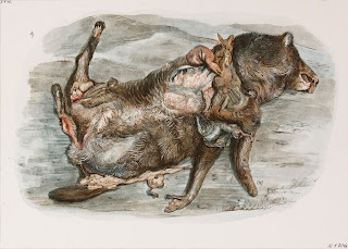 Egg tempera, illustration, Road kill