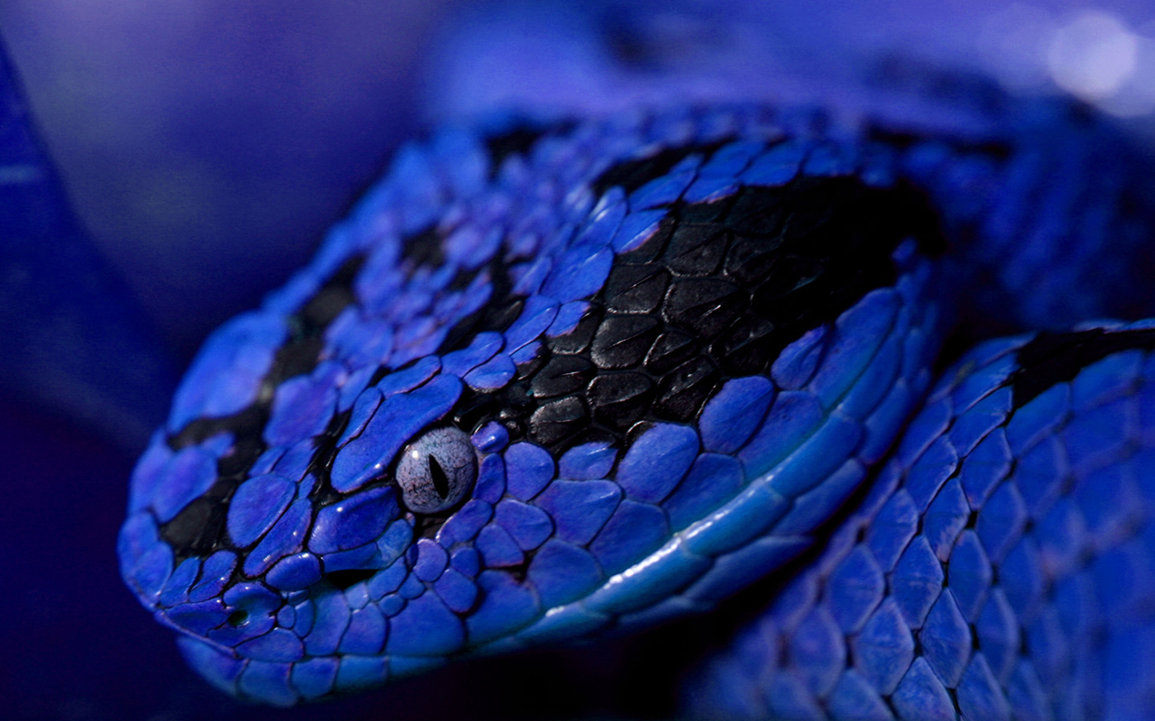 Blue Snake Images - Reverse Search