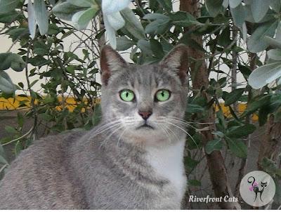 homeless cats Miami community cats stray cats