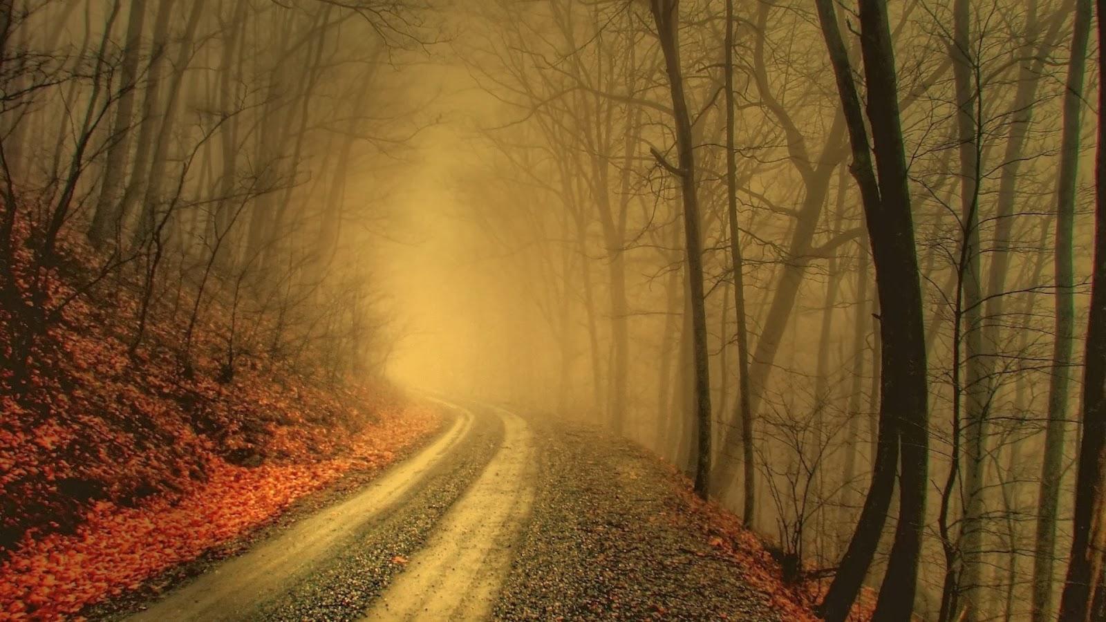 Bosque veladamente hojas & camino
