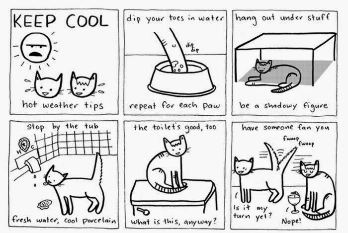 type of cat breeds