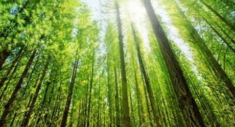 Importance of Forest, CBSE / NCERT Notes, CTET Exam Notes