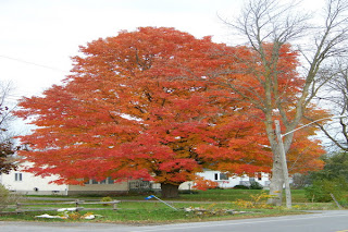 canada, beautiful image,Eastern Ontario