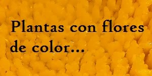 PLANTAS CON FLORES DE COLOR