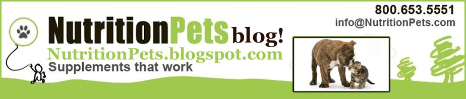 Dog & Cat Health Tips | Nutrition Pets