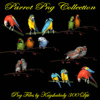 PNG resources, PNG Tubes, PNG tubes, Parrots, birds, animal png