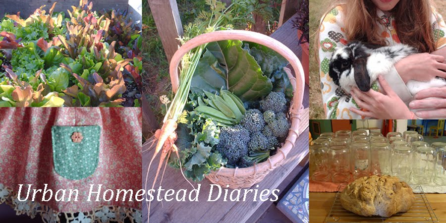 Urban Homestead Diaries