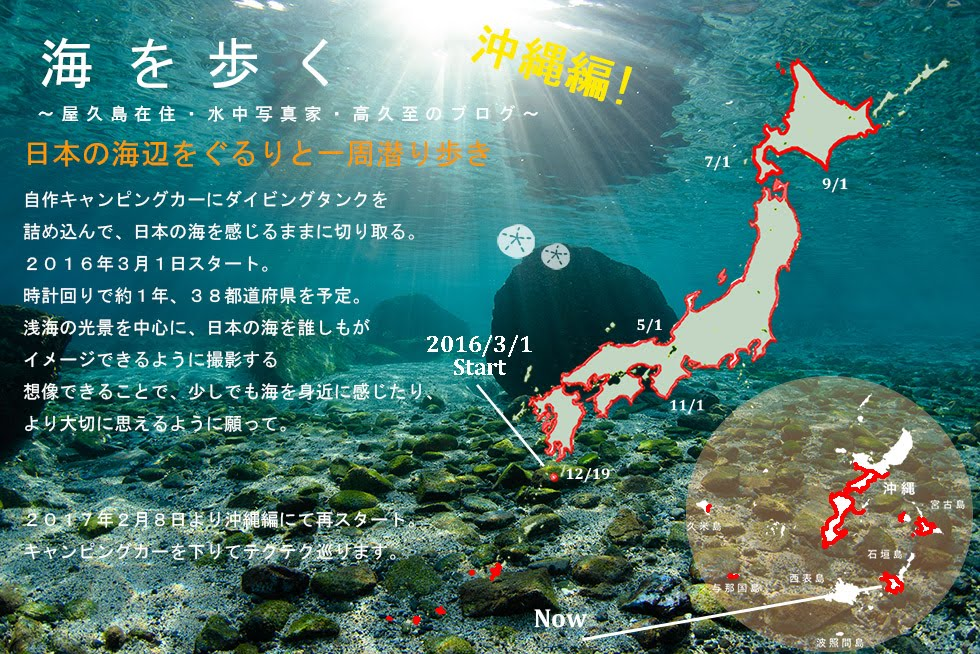海を歩く ~屋久島在住・水中写真家・高久至のブログ ~