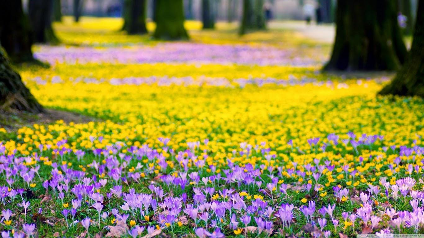 Meilleurs fonds d 39 crans paysages et fleurs fond ecran pc for Photo fond ecran hd pc