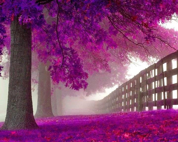 Beautiful Purple Forest Hidden Road
