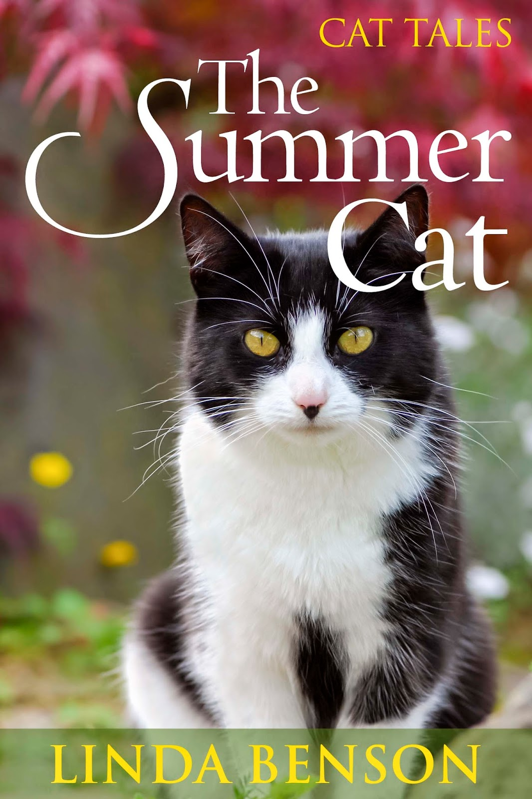 http://www.amazon.com/Summer-Cat-Tales-ebook/dp/B00KRPZLVQ